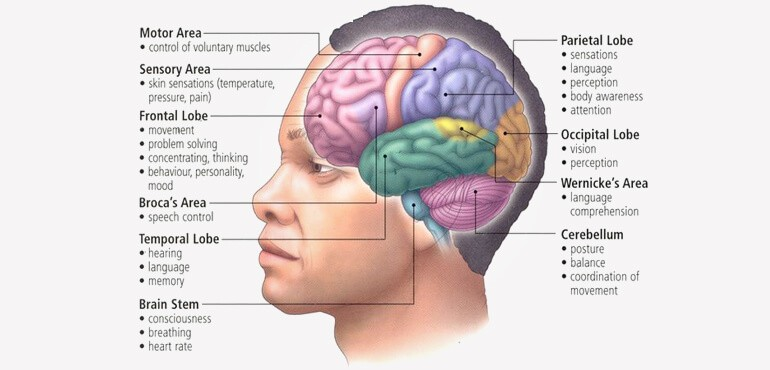 aqa gcse psychology brain and neuropsychology revision